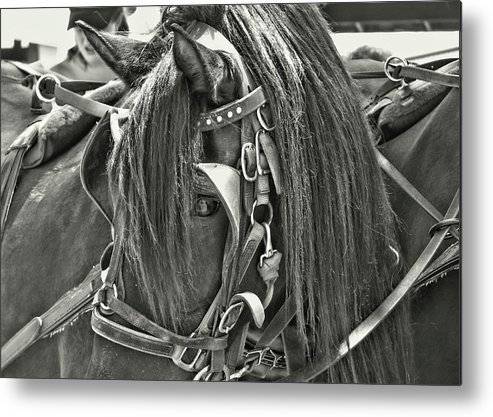 Horse Metal Print featuring the photograph Carriage Horse Beauty by JAMART Photography