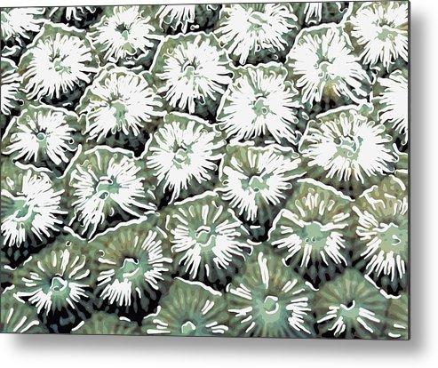 Starfish Metal Print featuring the painting Coral Close Up by Lanjee Chee