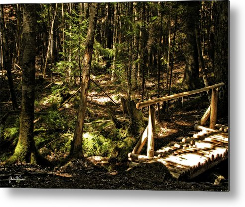 Landscape Metal Print featuring the photograph Deep Woods Trail by Jim Turri
