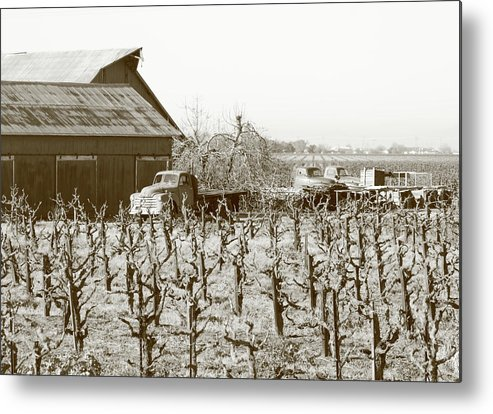 Abandoned Metal Print featuring the photograph Farm Trucks Lodi Ca by Troy Montemayor