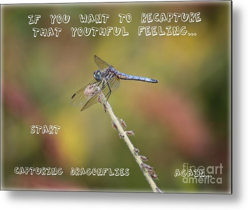 Dragonfly Art Metal Print featuring the photograph Feel Young Again by Carol Groenen
