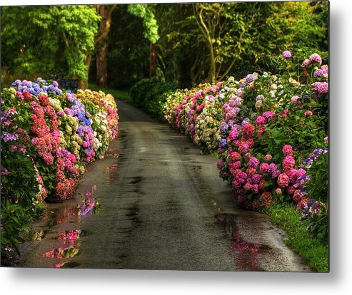 Road Metal Print featuring the photograph Flower Road by Svetlana Sewell