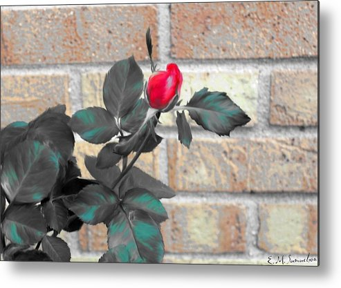 Rose Metal Print featuring the photograph Flowers And Bricks by Elise Samuelson