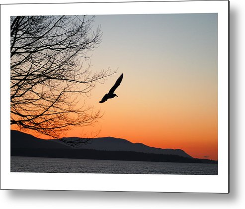 Seagull Metal Print featuring the photograph Glide by J D Banks