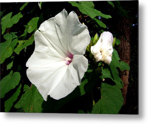 Flower Metal Print featuring the photograph Good Morning by Nicole I Hamilton