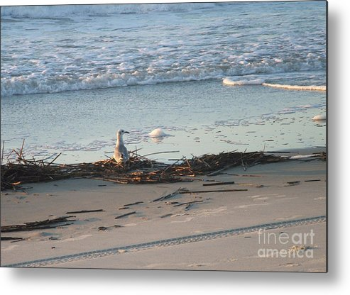 Gull Metal Print featuring the photograph Gull On Tybee Island Beach by Doris Blessington