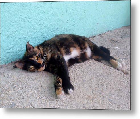 Cat Metal Print featuring the photograph Hemingway Cat by JAMART Photography