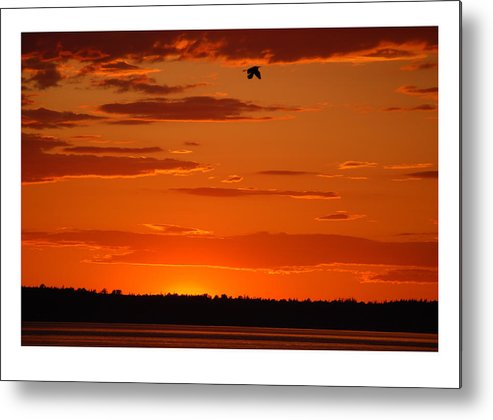Sunset Metal Print featuring the photograph Heron Sunset by J D Banks