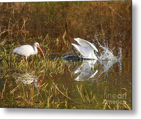 Water Metal Print featuring the photograph Hope You Got That by Carol Groenen