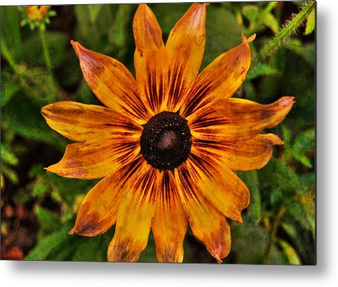 Flower Metal Print featuring the photograph Indian Summer by JAMART Photography