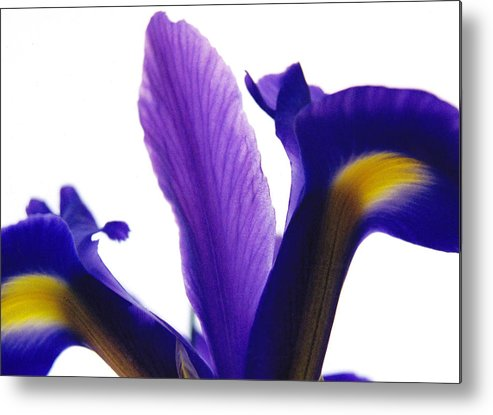 Iris Metal Print featuring the photograph Iris by Vah Pall