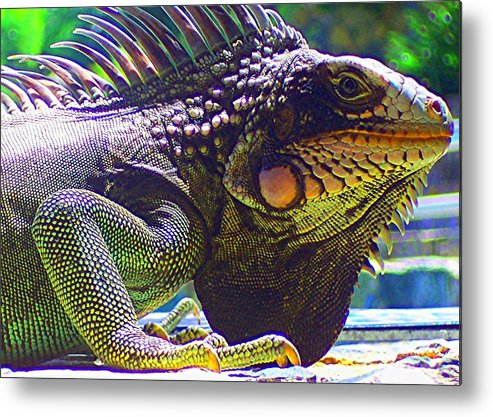 Iguana Metal Print featuring the photograph Island Iguana by Caroline Urbania Naeem