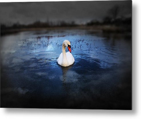 Adorable Metal Print featuring the photograph Left Behind by Svetlana Sewell