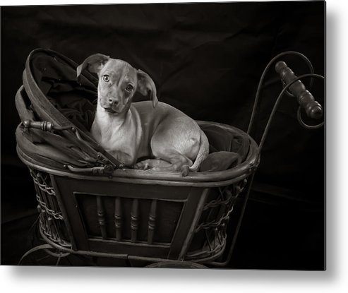 Pram Metal Print featuring the photograph Let's Go For A Walk by Sherri Barrett