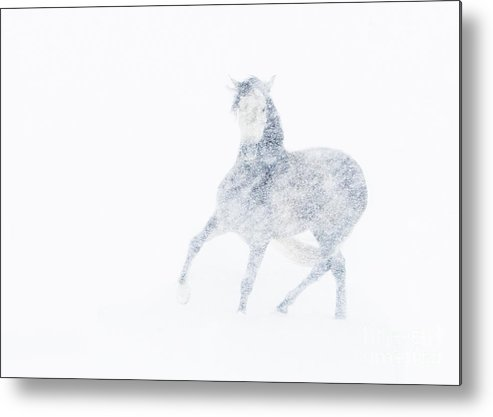 Mare Metal Print featuring the photograph Mare In A Blizzard I by Carol Walker
