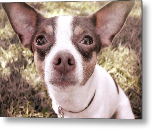 Dog Metal Print featuring the photograph Miss Lily by JAMART Photography