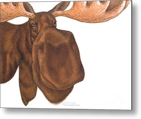 Moose Metal Print featuring the painting Moose Head by Shiny Thoughts