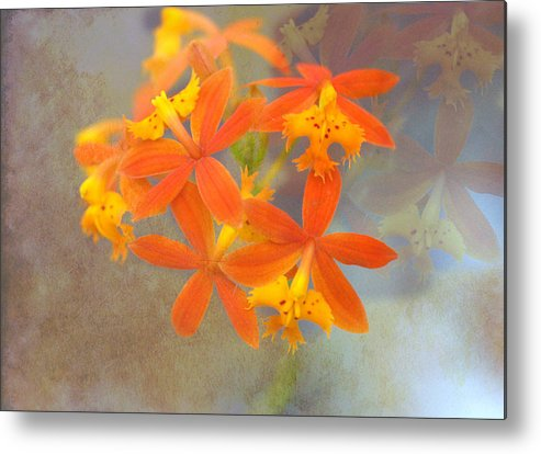 Metal Print featuring the photograph Orange Dream by Eagle Finegan