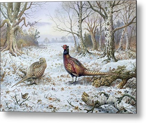 Game Bird; Snow; Woodland; Perdrix; Faisan; Troglodyte; Pheasant; Pheasants; Tree; Trees; Bird; Animals Metal Print featuring the painting Pair Of Pheasants With A Wren by Carl Donner
