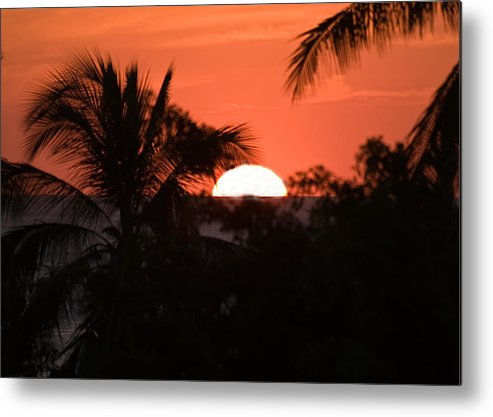 Sun Metal Print featuring the photograph Palm Sunset by Jim DeLillo