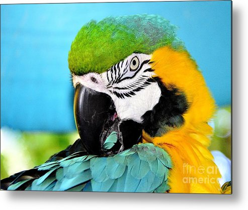 Parrot Time Metal Print featuring the photograph Parrot Time 3 by Lisa Renee Ludlum