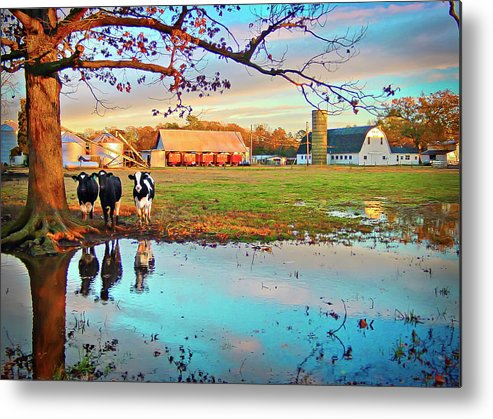 Bacons Castle Metal Print featuring the photograph Pasture At Bacon's Castle by Williams-Cairns Photography LLC
