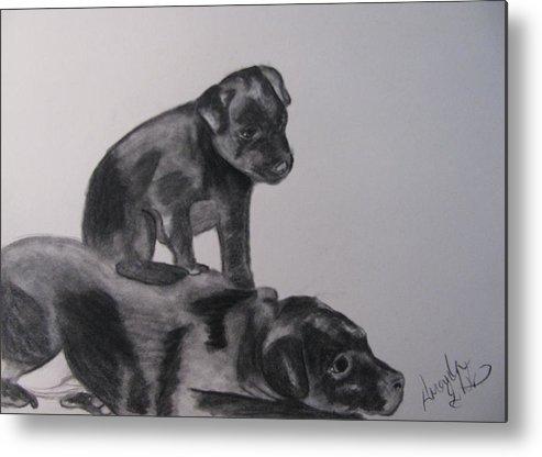 Puppies Metal Print featuring the drawing Patterdales by Amanda Burek