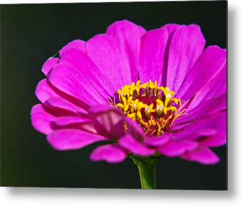 Flower Metal Print featuring the photograph Purple Flower Close Up by Edward Myers
