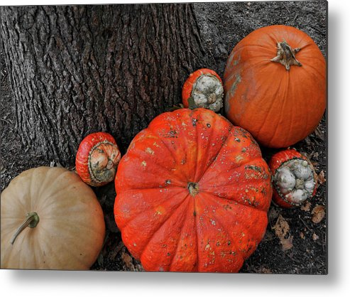 Pumpkin Metal Print featuring the photograph Red Orange by JAMART Photography