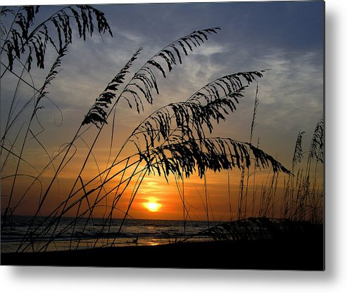 Sea Oats Metal Print featuring the photograph Sea Oats by Dan Wells