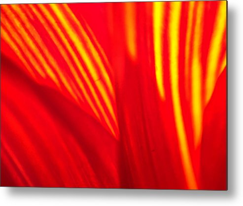 Sunflower Metal Print featuring the photograph Sunflower Fire 3 by Nathan Little