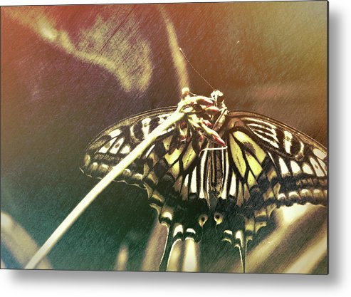 Butterfly Metal Print featuring the photograph Swallowtail by JAMART Photography