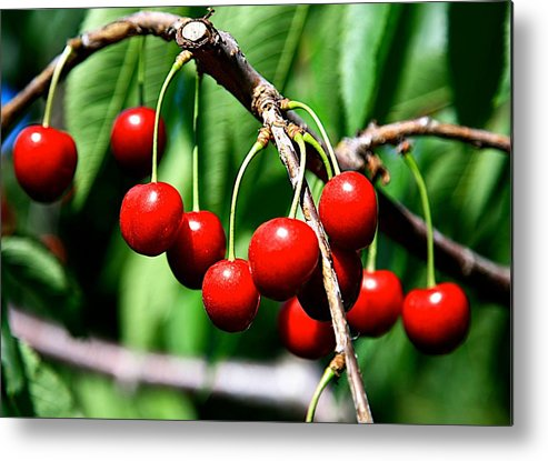Cherry Metal Print featuring the photograph Sweet Cherry Pie by Robert Pearson