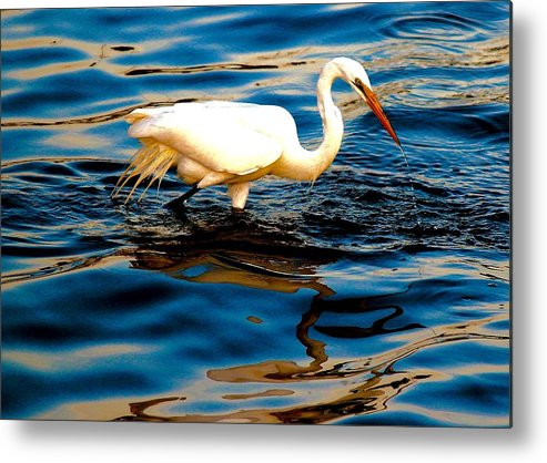 Water Bird Metal Print featuring the photograph Water Bird Series 34 by Stephen Poffenberger