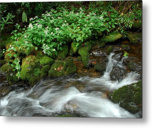Wildflowers Metal Print featuring the photograph White Asters Along Palmer Branch by Alan Lenk