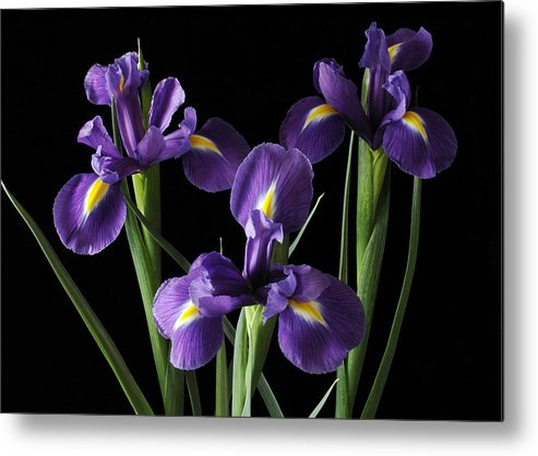 Iris Metal Print featuring the photograph Wild Iris by Nancy Griswold