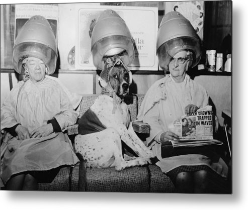 People Metal Print featuring the photograph Hair Of The Dog by Paul Fievez