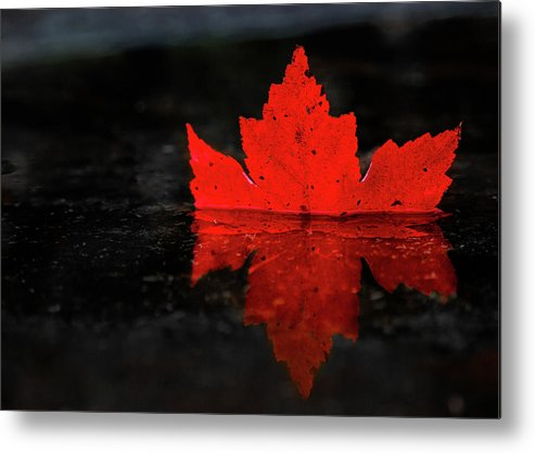 Red Leaf Reflection by Tim Kirchoff