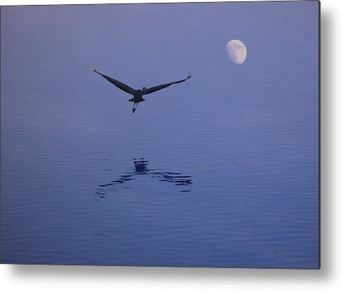 Nature Metal Print featuring the photograph Fly To The Moon by Eric Workman