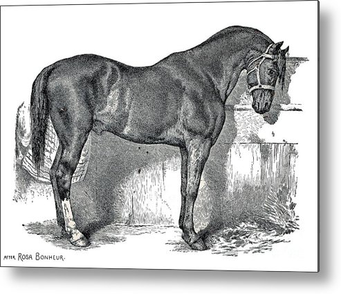Horse Metal Print featuring the drawing Antique Horse Drawing by Rose Santuci-Sofranko