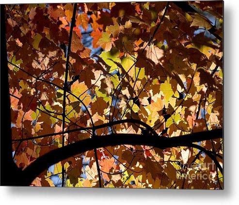 Arboretum Metal Print featuring the photograph Arboretum Fall by Steven Ralser