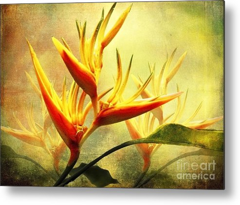 Flowers Metal Print featuring the photograph Flames Of Paradise by Ellen Cotton
