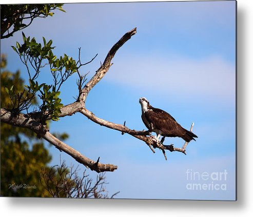 Osprey Metal Print featuring the photograph Florida Osprey Having Breakfast by Michelle Wiarda-Constantine