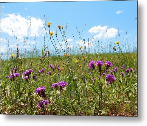 Wildflowers Metal Print featuring the photograph Georgia Wildflowers by Stacey Pollio