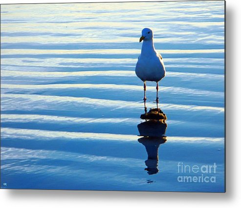 Birds Metal Print featuring the photograph Low Tide Mirror by Everette McMahan jr