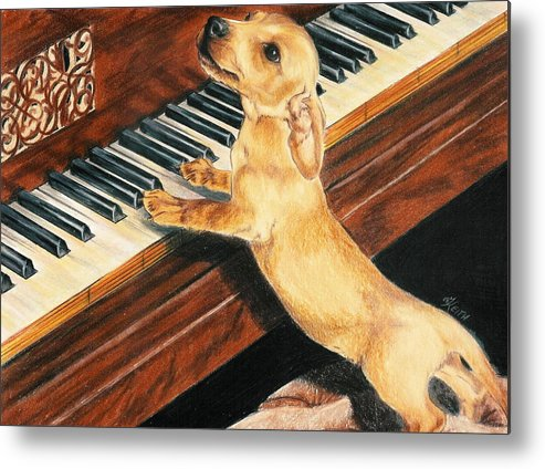 Purebred Dog Metal Print featuring the drawing Mozart's Apprentice by Barbara Keith