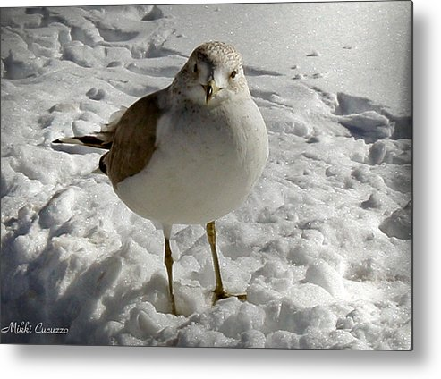 Seasonal Metal Print featuring the photograph Pigeon In The Snow by Mikki Cucuzzo