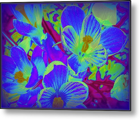 Pop Art Blue Crocuses - Pop Art - Blue Flowers - Blue Blossoms - Spring Flowers - Spring Blossoms - Nature - Plants - Colorful Flowers - Florals - Flowers - Metal Print featuring the photograph Pop Art Blue Crocuses by Dora Sofia Caputo Photographic Design and Fine Art