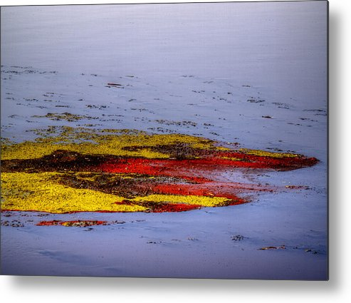 Algae Metal Print featuring the photograph Psychedelic Algae by Thomas Young