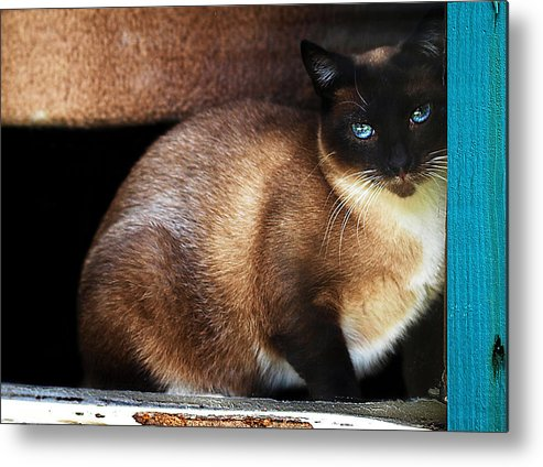 Cat Metal Print featuring the photograph Rescue Me by Camille Lopez